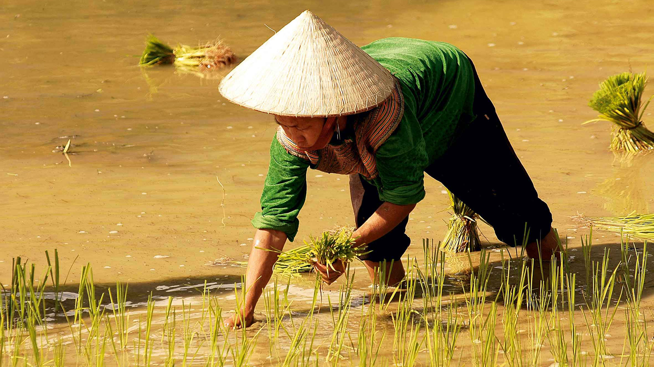 Wietnam – kraj taki jak nasz…