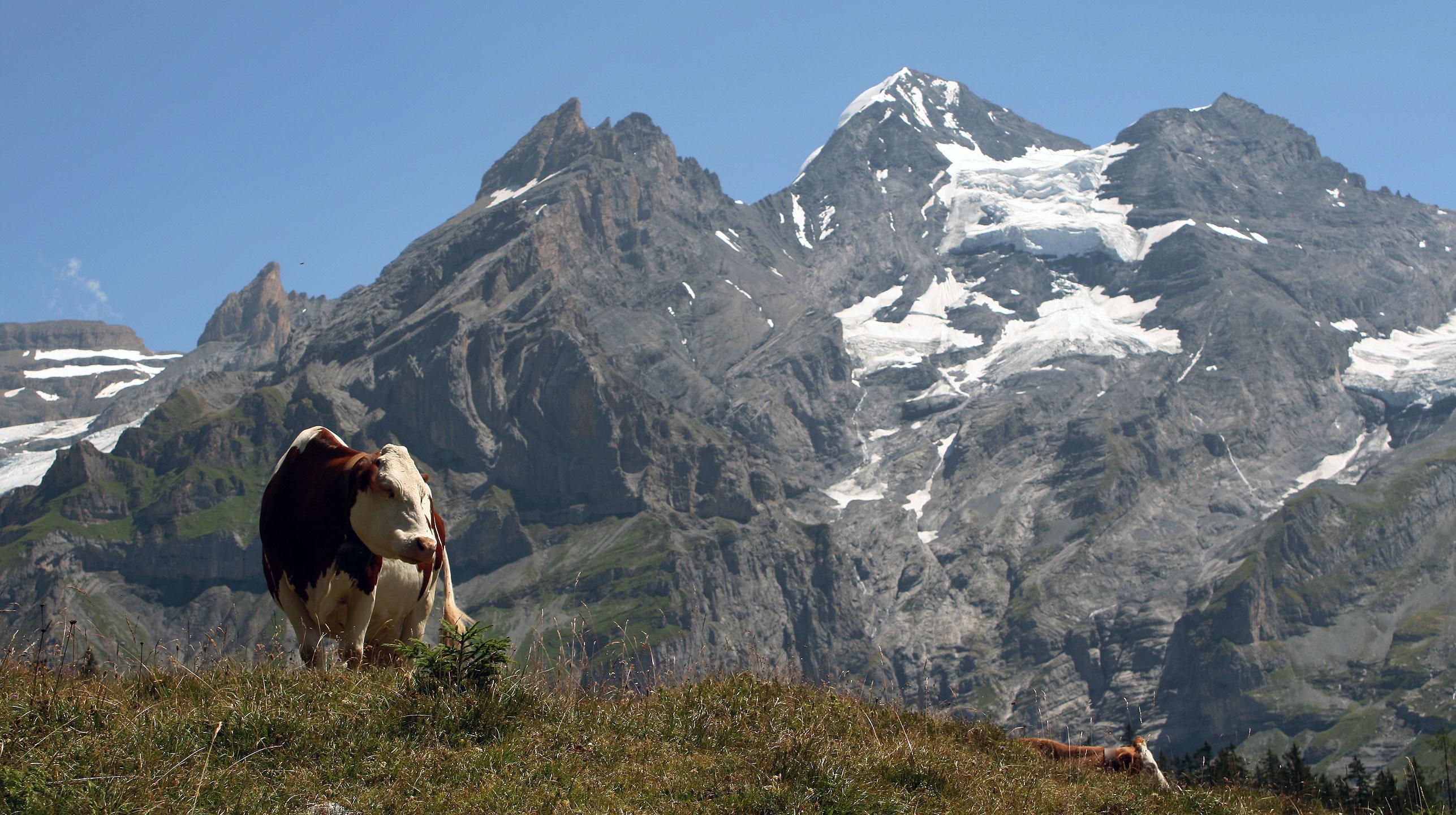 Szwajcaria – Berneński Oberland, Blüemlisalp i Bire